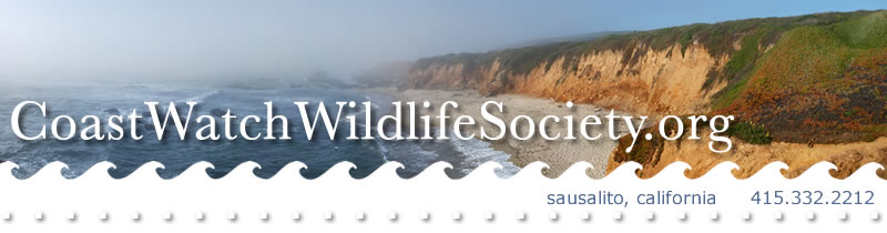 Coastwatch Wildlife Society
