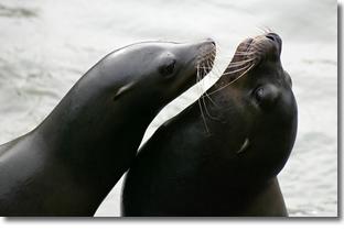 sealcontact