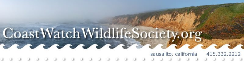 Coast Watch Wildlife Society